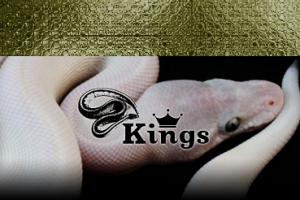 ボールパイソン専門店 kings