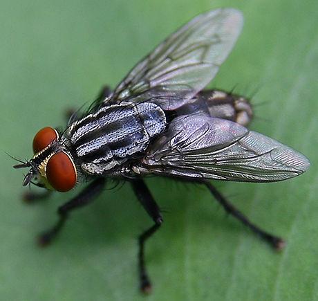 serangga08-058