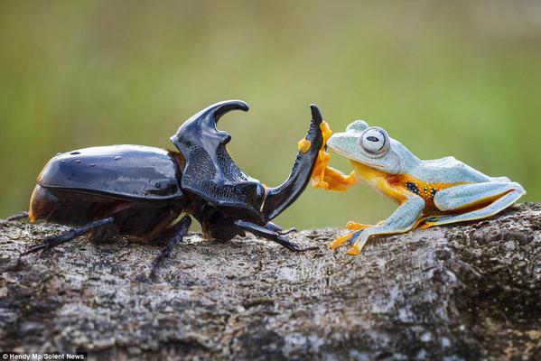 楽しそうなカエル