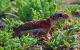 アンダーウッディサウルス (Underwoodisaurus milii)の飼育方法