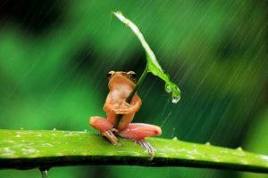 【画像】台風の時って野生動物はどうやって過ごして…