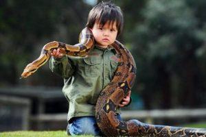 【ニュース】飼いヘビを連れて泳ぎに行く → ヘビ逃走