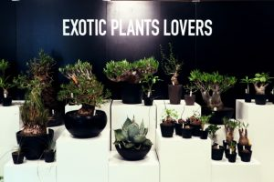 「SOUL CANP 2018 at ISETAN」で塊根植物に癒される