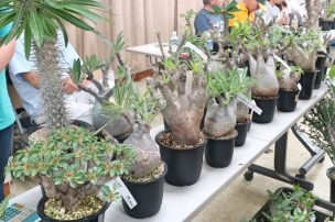 色々な塊根植物の写真