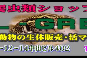 爬虫類ショップ リアルグリーン