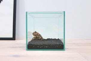 ベルツノガエル新飼育環境