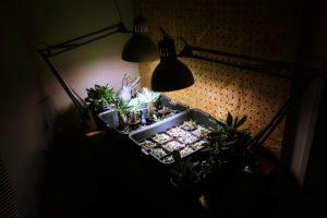 IKEAの植物育成ライト「ヴェクセル」を購入したので使用感をレビュー